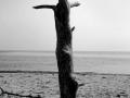 46. Aurélien AUGER - Ile de ré plage de Trousse Chemise